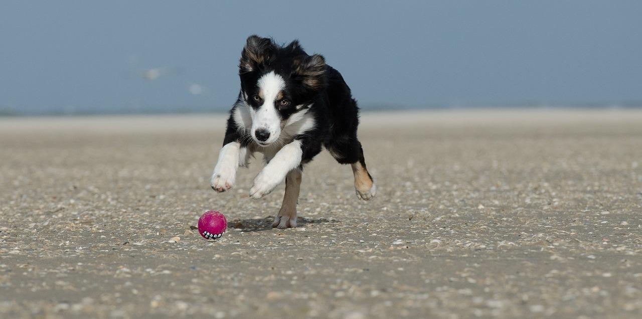 Urlaub mit hund an der ostsee auf usedom hotel villen im park for Urlaub auf juist mit hund